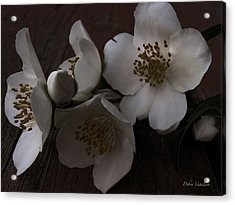 Dusk Blooms Acrylic Print by Debra     Vatalaro