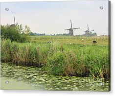 Dutch Landscape With Windmills And Cows Acrylic Print by Carol Groenen