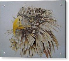 Eagel Acrylic Print by Per-erik Sjogren