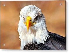 Eagle 21 Acrylic Print by Marty Koch