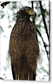 Acrylic Print featuring the photograph Eagle At Bharatpur by Pravine Chester