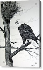 Eagle At Nest Acrylic Print by John Smeulders