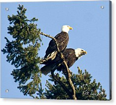 Eagle Conversation Acrylic Print
