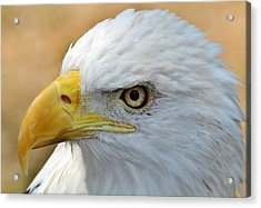 Eagle Eye 2 Acrylic Print