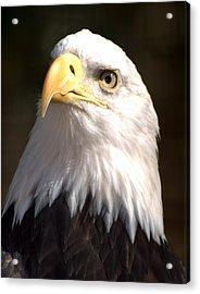 Eagle Eye Acrylic Print by Marty Koch