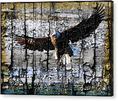 Eagle Imprint Acrylic Print by Carrie OBrien Sibley