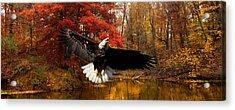 Acrylic Print featuring the photograph Eagle In Autumn Splendor by Randall Branham