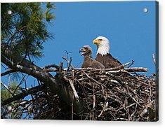 Eagle Nest Acrylic Print