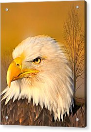 Eagle On Guard Acrylic Print by Marty Koch