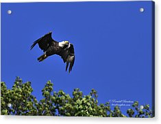 Acrylic Print featuring the photograph Eagle Over The Tree Top by Randall Branham
