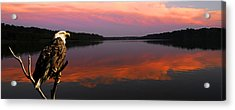 Acrylic Print featuring the photograph Eagle Overlooking Domain by Randall Branham