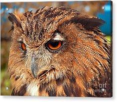Eagle Owl Acrylic Print by Graham Taylor
