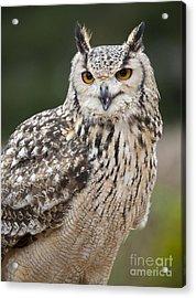 Eagle Owl II Acrylic Print
