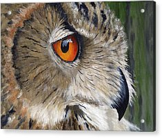 Eagle Owl Acrylic Print by Mike Lester