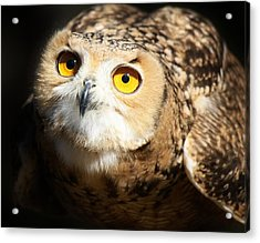 Eagle Owl Acrylic Print by Paulette Thomas