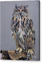 Eagle Owl Acrylic Print by Tanya Patey