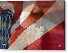 Eagle Acrylic Print by Rebecca Frank