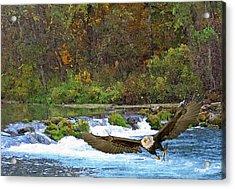 Eagle Snatch Acrylic Print by Julie Grace