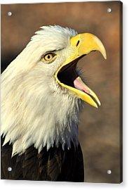 Eagle Squawk Acrylic Print by Marty Koch