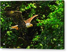Acrylic Print featuring the photograph Eagle Taking Lunch To Her Babies by Randall Branham