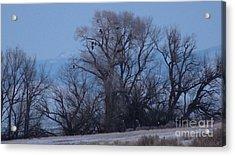 Eagle Tree Acrylic Print by David Bearden