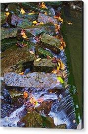 Early Autumn 2 Acrylic Print by Todd Sherlock