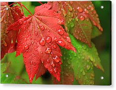 Early Autumn Acrylic Print by Lee Amerson