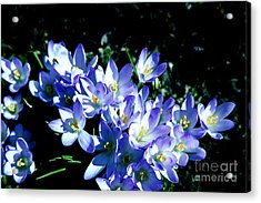 Early Blooms Acrylic Print by Rick Bragan