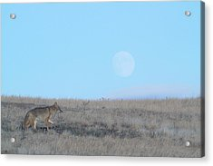 Early Hunt Acrylic Print