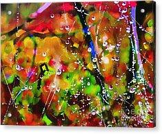 Early Morning Dew Acrylic Print by Judi Bagwell
