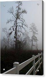 Early Morning Fog Acrylic Print by Sandi Blood