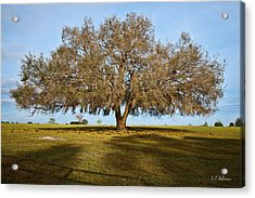 Early Morning Oak Acrylic Print by Christopher Holmes