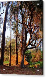 Early Morning On The Highway Acrylic Print by Sandi Blood