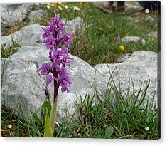 Early Purple Orchid Acrylic Print by Rob Hemphill