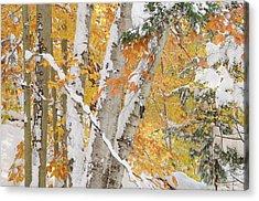 Early Snowfall Acrylic Print