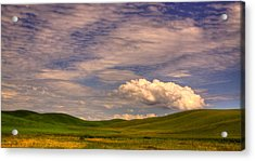 Early Summer Wheat In The Palouse Acrylic Print by David Patterson