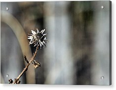 Earth Tones Acrylic Print by JC Findley