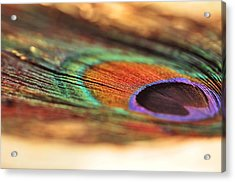 Earthy Feather  Acrylic Print