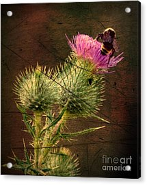 Easy Stepping Acrylic Print by David Taylor