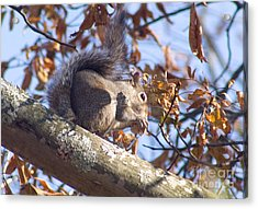 Acrylic Print featuring the photograph Eating Squirrel by Michael Waters