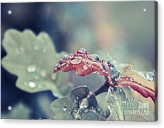 Eau De Vie - S04a Acrylic Print by Variance Collections
