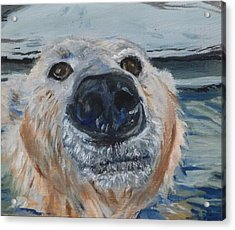 Acrylic Print featuring the painting Ed As A Polar Bear by Jessmyne Stephenson
