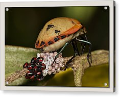 Acrylic Print featuring the digital art Eggs Hatched 02 by Kevin Chippindall