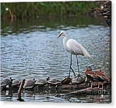 Egret Bird - Supporting Friends Acrylic Print