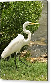 Acrylic Print featuring the photograph Egret By The Bay by Rick Frost