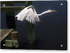 Egret Coming Off The Block Acrylic Print by Paulette Thomas