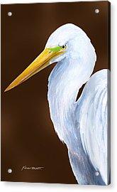 Egret Head Study Acrylic Print by Kevin Brant