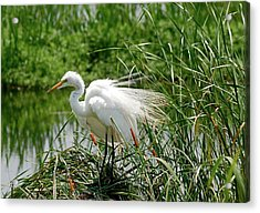 Acrylic Print featuring the photograph Egret by Kathy Gibbons