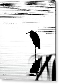 Acrylic Print featuring the photograph Egret  by Lizi Beard-Ward