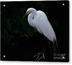 Acrylic Print featuring the photograph Egret On A Branch by Art Whitton